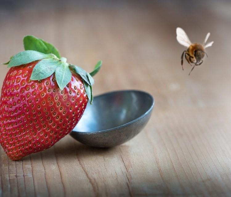 Bee & strawberry