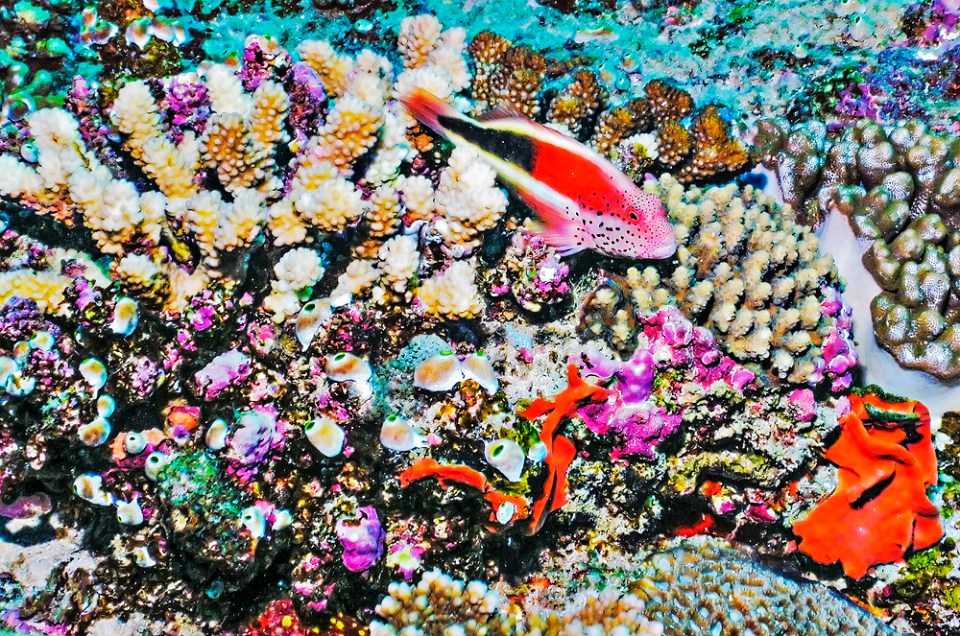 A Guide To Underwater Photography