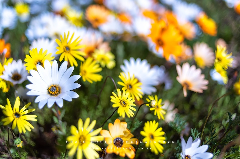 Travel – The Spring Flowers of Namaqualand