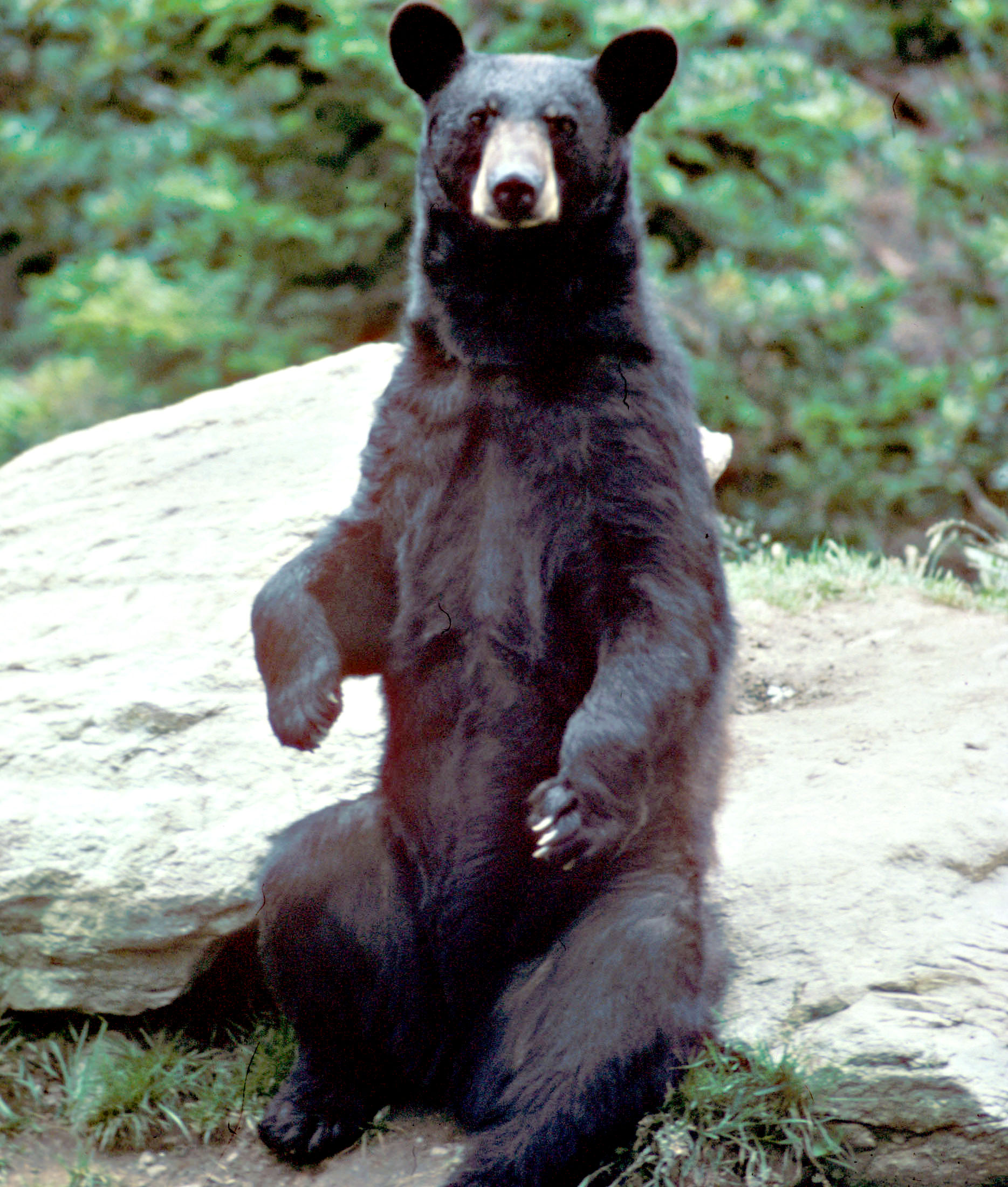 Black+Bear