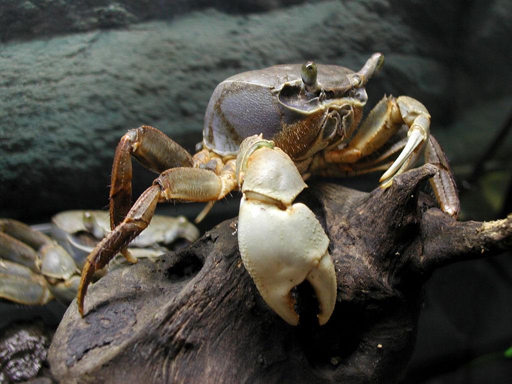 Crab-1-6GJ01NX1JG-1024x768