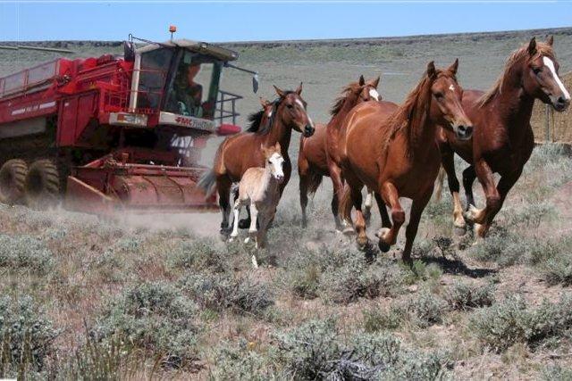 Horse Harvesting