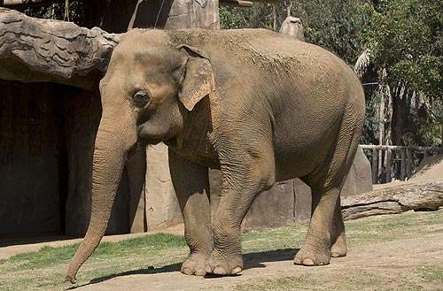 sunita-wild-animal-park-oldest-elephant