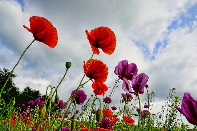 Cranleigh in Bloom Centenary Garden