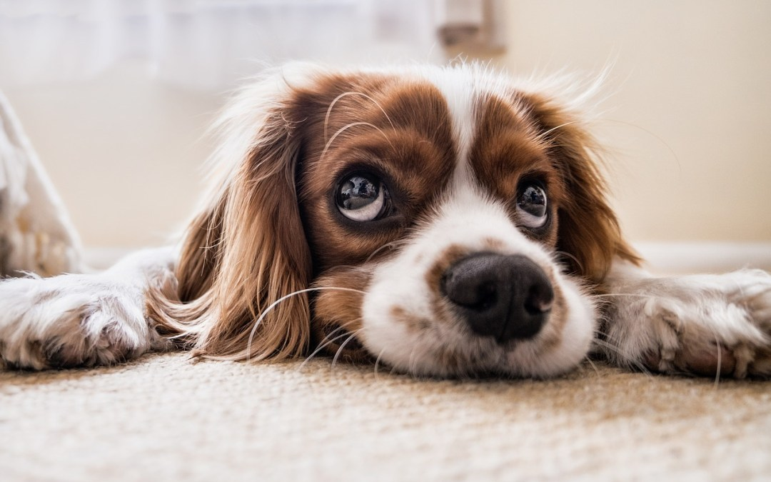 Proposed Dog Control Order Consultation – by Waverley Borough Council