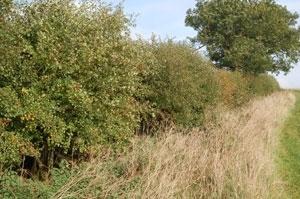 Trees & Waverley's planning enforcement rules……
