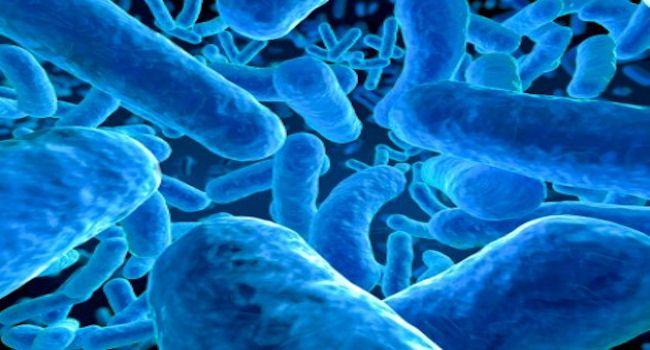 """Résultat de recherche d'images pour """"etre humain et microbes"""""""