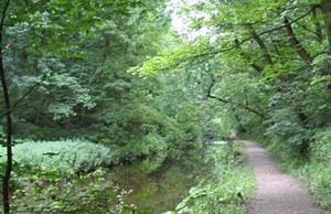 Skipton Woods