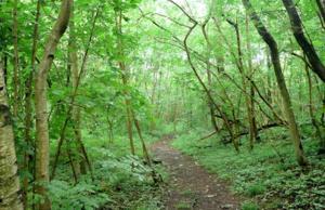 Grass Woods
