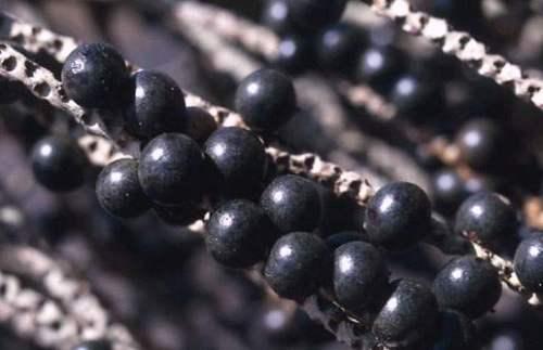 Acai-Berry-2