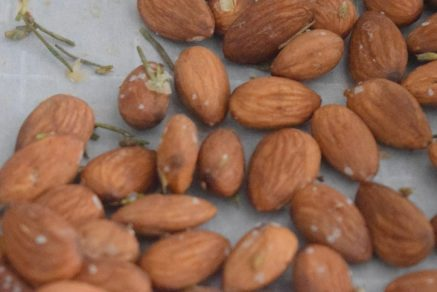 Rosemary Lavender Candied Almonds-008