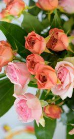 Pickled Rose Petals-001