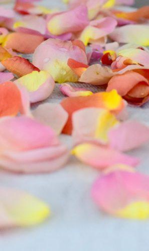Pickled Rose Petals-007