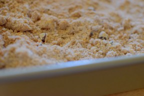 pecan-pumpkin-spice-crumble-bars-023