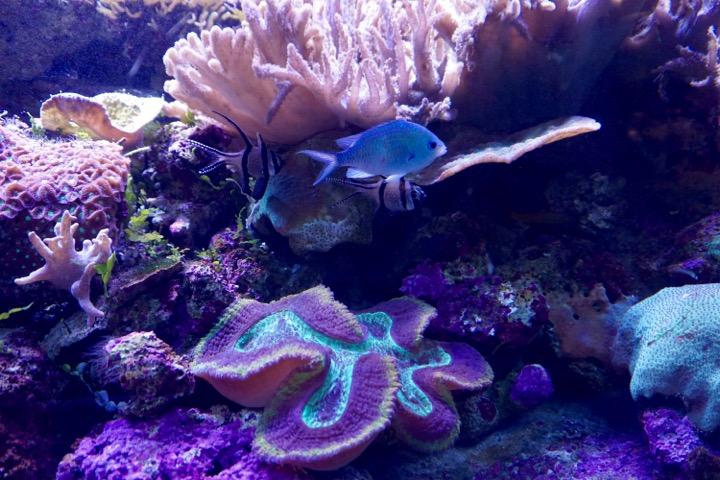 Sydney Aquarium