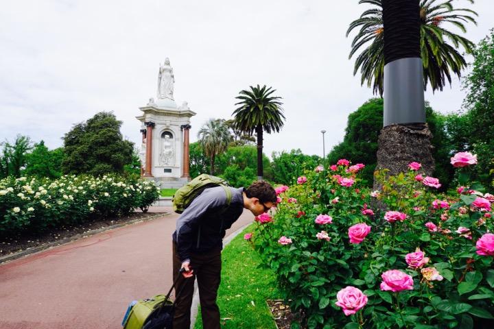 Melbourne Roses
