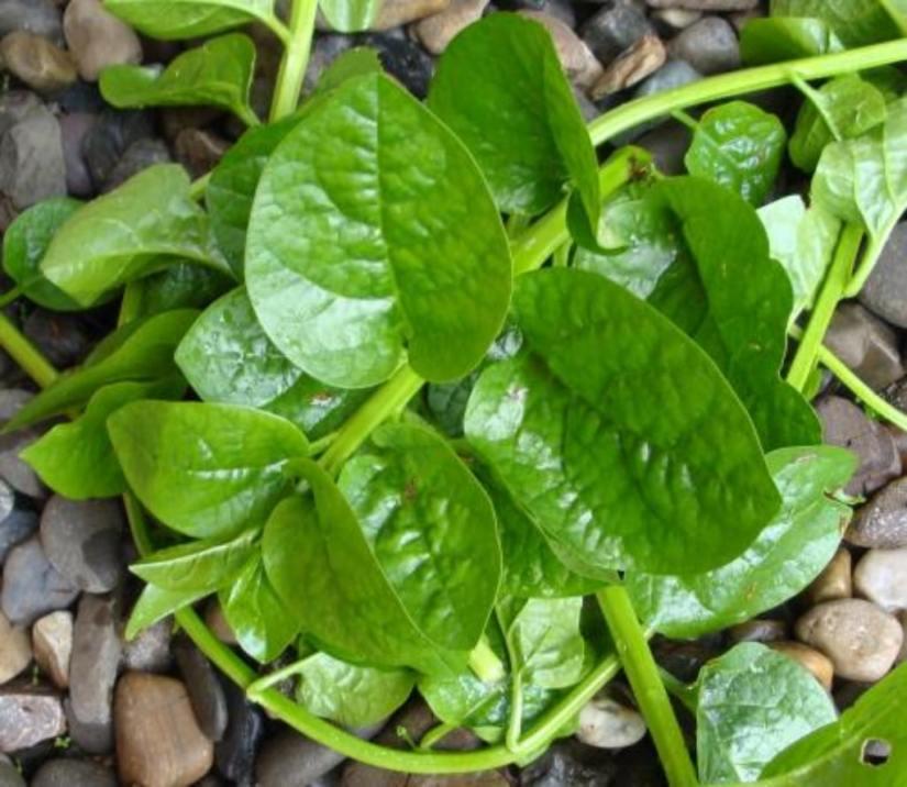 poi leaves