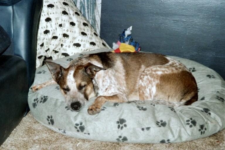 Dog Page sleeping on dog bed