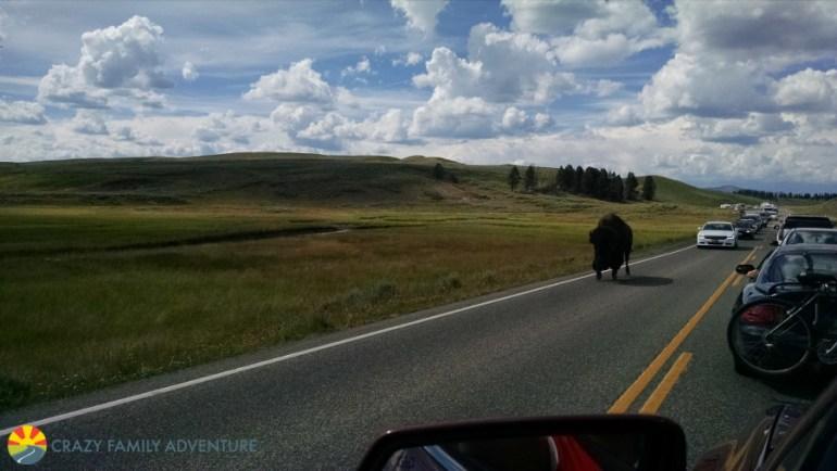 buffalo-jam