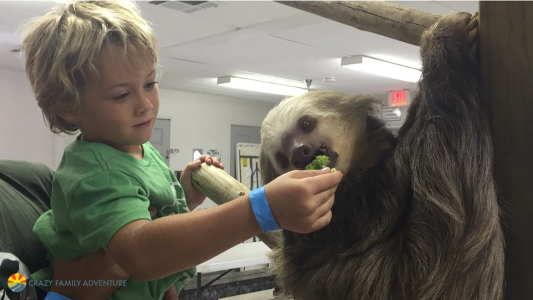 Palm Beach Zoo Animal Encoutner with a Sloth