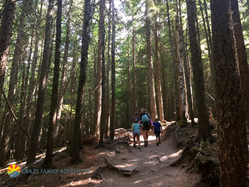 Hiking to Avalanche Lake in Glacier National Park