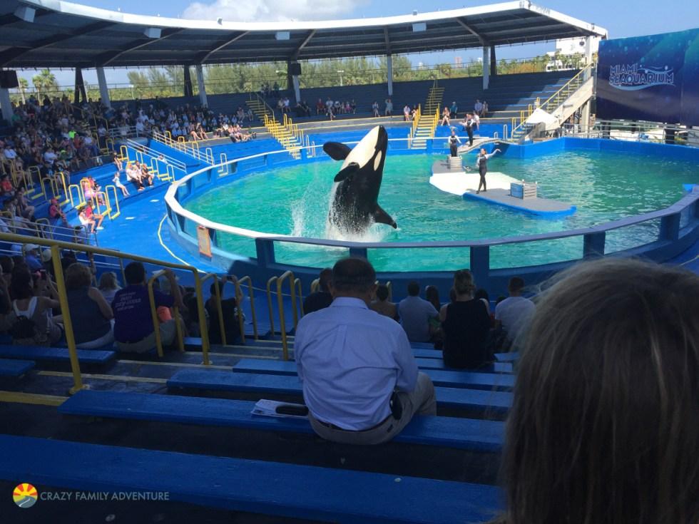 Miami Seaquarium on The Ultimate Florida Road Trip