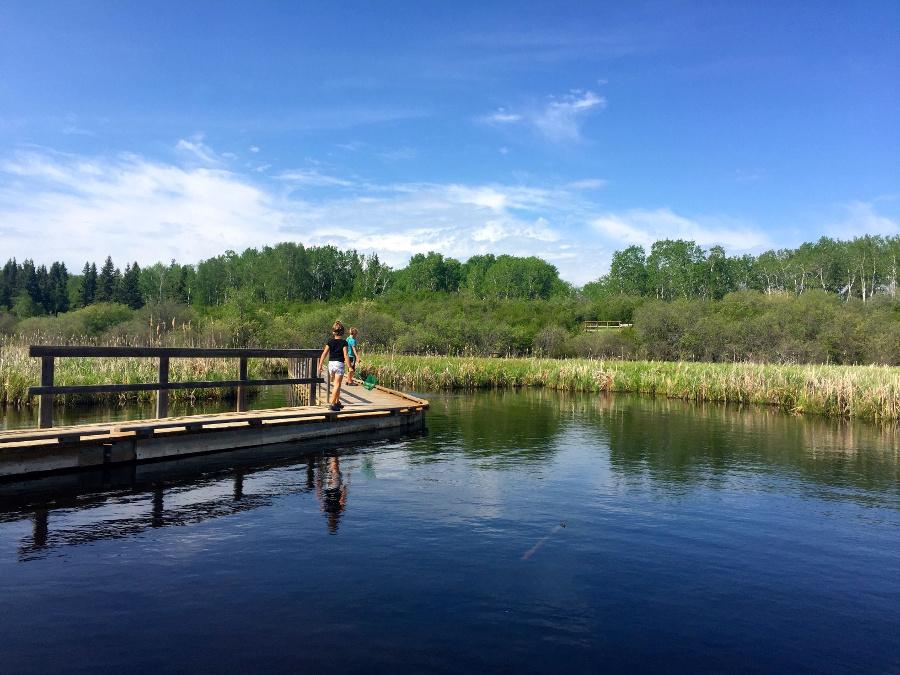 Walking along the Ominik Marsh boardwalk trail in Riding Mountain National Park