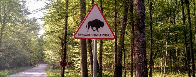 Puszcza Białowieska - Kraina Żubra. Fot. Crazy Nauka
