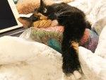 Frankie hugs the yarn