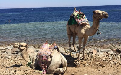Egypt: Top 10 Things to Know Before you Go