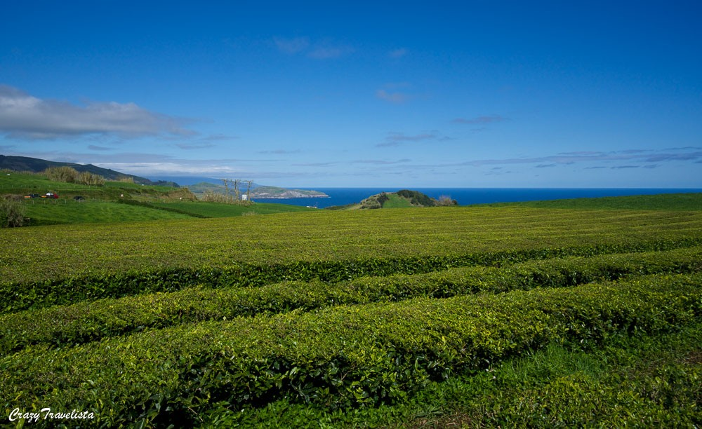 Gorreana Tea Plantation