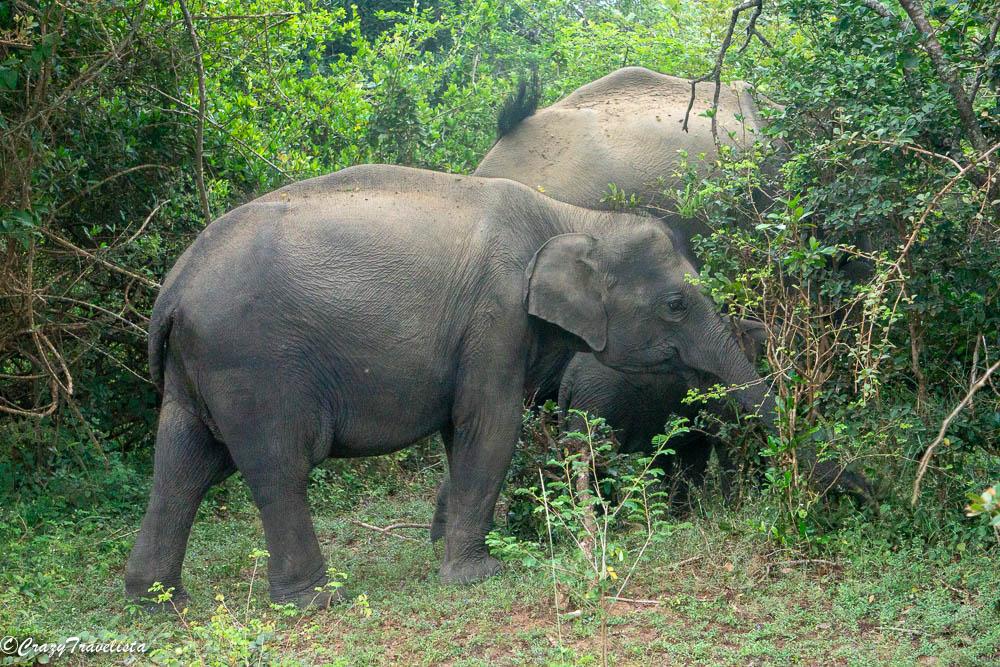 Sri Lanka 9-Day Itinerary