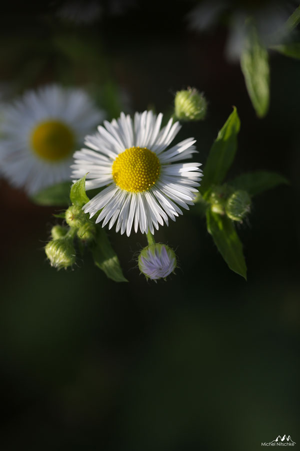 Autres fleurs 1