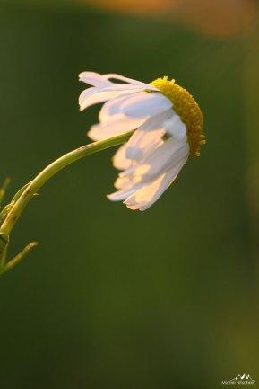 Autres fleurs 9