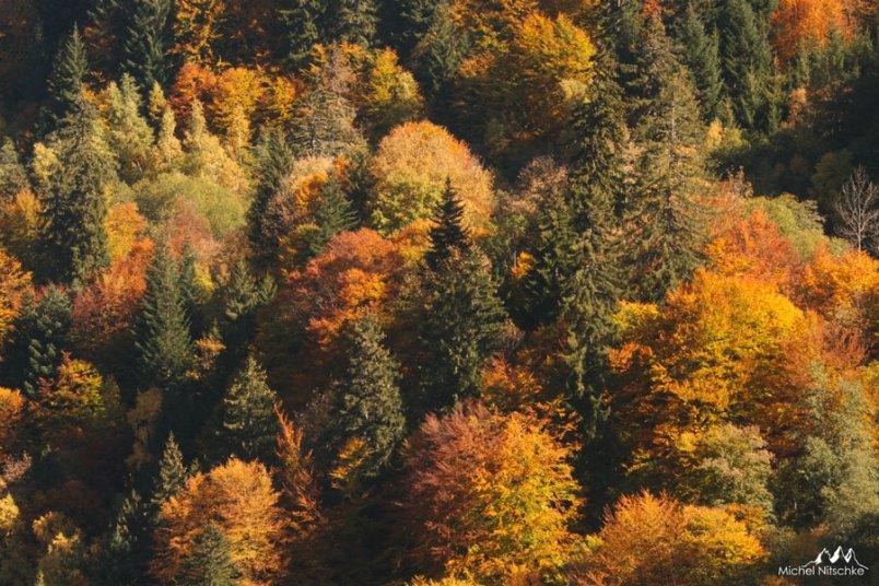 Forêts 14