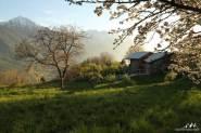 Coucher soleil cerisier