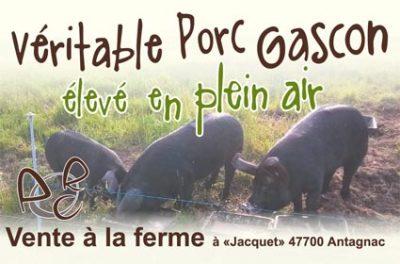 Création : Carte de visite Porcs Gascons en plein air