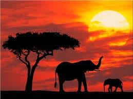 Kenya fai da te…