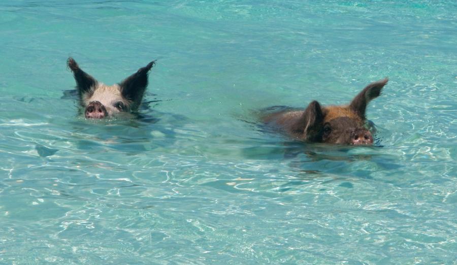Big Majors Spot Aka Piggy Beach Life Is A Cream Puff