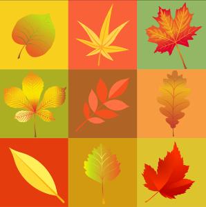 autumn-1646457_960_720