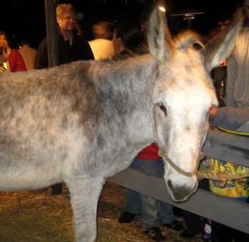 Back To Bethlehem - Donkey
