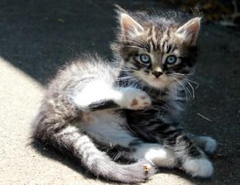 Kittens Weeks 5-6