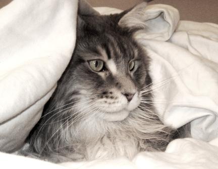 Tsunami - One Calm Cat
