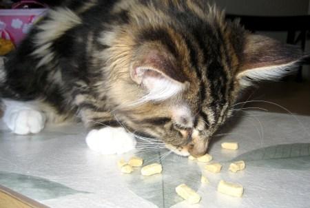 Magellan Likes Origen Cat Treats