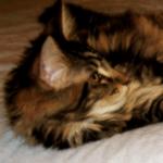 Magellen - Kitten