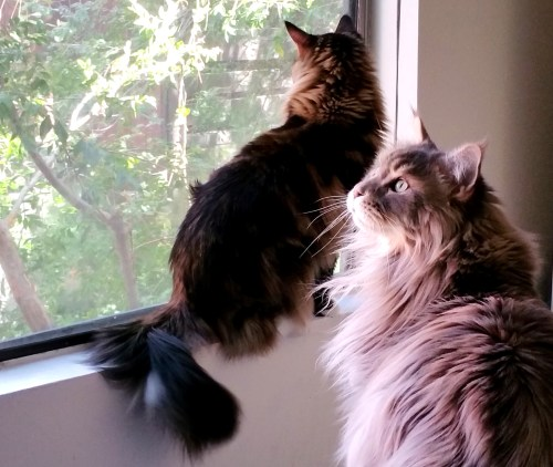 My-Cats-See-A-Squirrel-Create-With-Joy.com