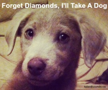 Dogs Over Diamonds