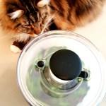 Magellan-OXO-Salad-Spinner-Create-With-Joy.com-1