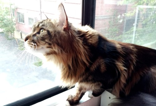 Magellan Window Watching