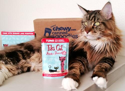 Magellan-Tiki-Cat-Feature-Photo